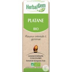 Platane - Herbalgem - klessentiel.com