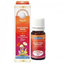 Perles d'huile essentielle euclayptus radiata bio,biofloral, klessentiel.com